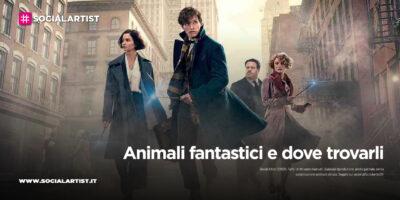 Warner Bros – Animali fantastici e dove trovarli (2016)